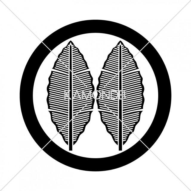 丸に並び芭蕉(2)