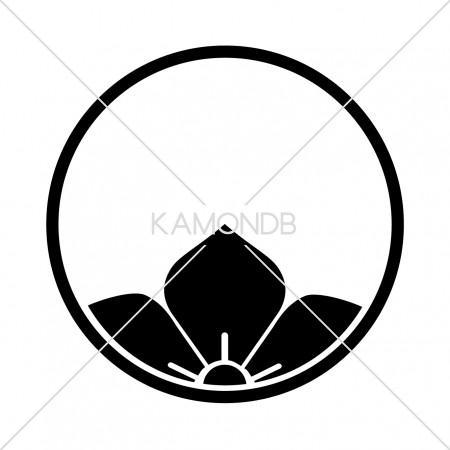 糸輪に覗き桔梗