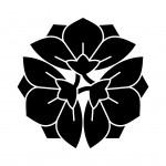 三つ横見桔梗(2)